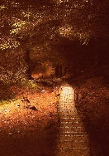 Forest Path, Wicklow, Ireland