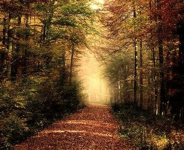 Autumn Forest, Rhon Mountains, Germany